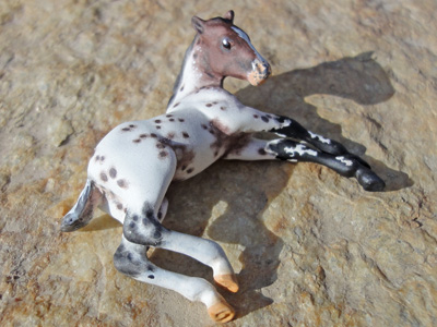 appy foal custom model horse by Sarah Tregay